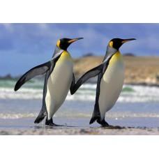 3D pohľadnica Tučniaky