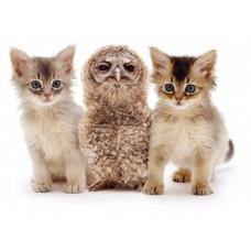 3D pohľadnica Mačiatko a sova