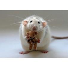 3D pohľadnica Potkan